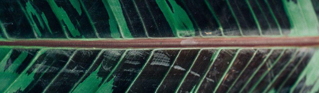 zbliżenie liścia