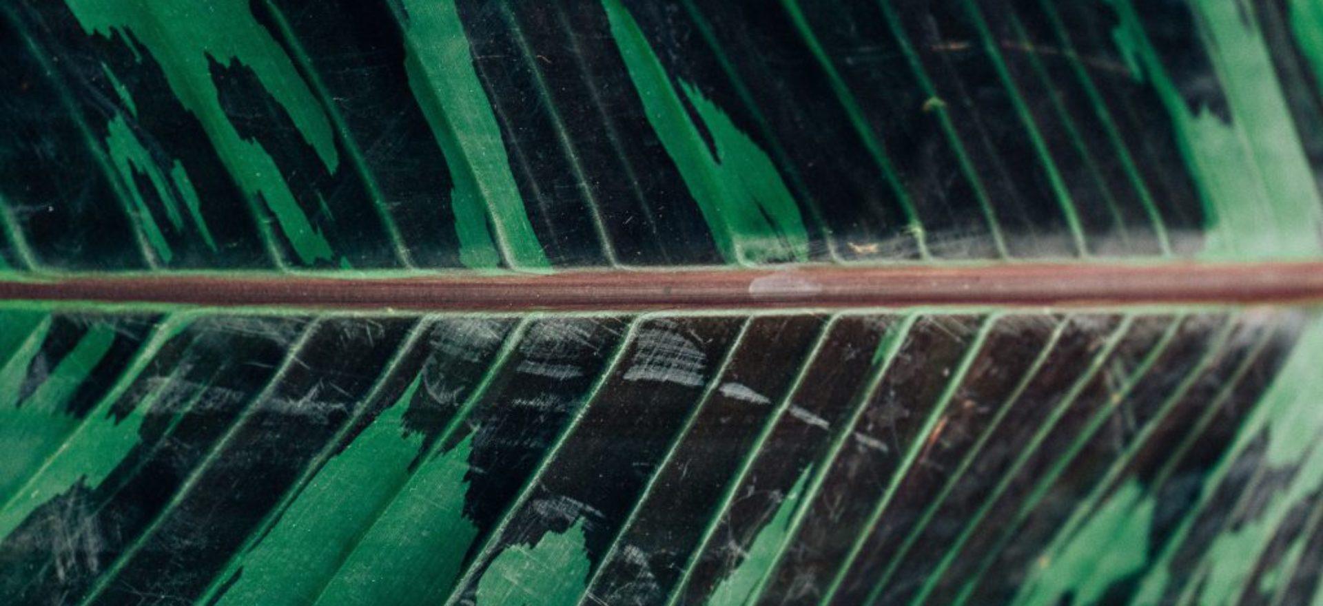 """Konferencja naukowo - szkoleniowa 10 – 11 września 2020 """"Ekoflora lasu, procedury przy uznawaniu jako pomniki przyrody cennych drzew rosnących na terenie zespołów leśnych Warmii i Mazur"""" – Łańsk."""